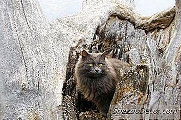 Cómo Hacer Un Árbol De Gato Rústico