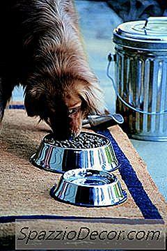 Mese Pentru Câini