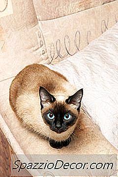 Como Neutralizar Odores De Spray De Gato Na Casa