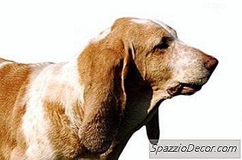 Een Hond Stoppen Die Blaft Door Het Hek