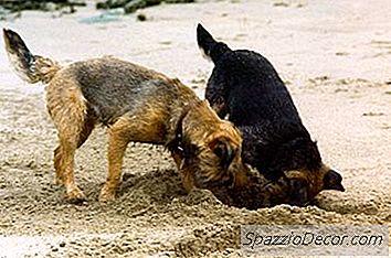 Een Hond Stoppen Met Graven En Ontsnappen