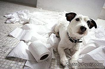Hoe Een Hond Te Stoppen Met Het Eten Van Toiletpapier