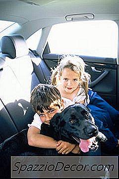 Como Impedir Que Os Cães Chorem No Carro