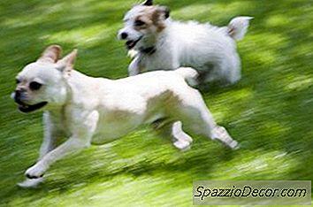 Cómo Detener El Ladrido Excesivo Cuando Tienes Varios Perros