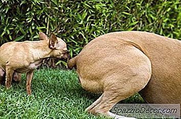 Como Impedir Que Cachorros Machos Farejem Outros Cachorros Machos