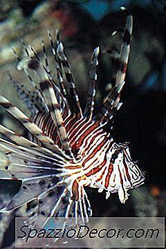 Microblokken In Een Aquarium Stoppen