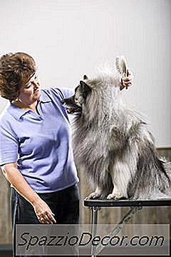 Como Usar Escovas Slicker Em Cães