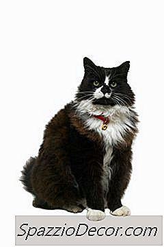 ¿Alstroemeria Es Venenosa Para Los Gatos?