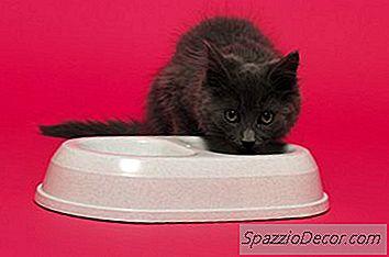 É Prejudicial Para Um Gatinho Comer Comida De Gato De Adulto?
