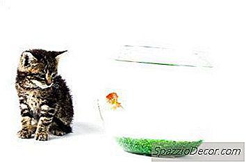 Păstrarea Unei Pisici Din Partea Superioară A Rezervorului De Pește