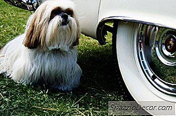 Legile Privind Transportul Câinilor În Autoturisme