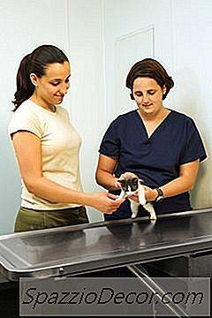 Tempo De Vida De Gatos Com Aids Felina