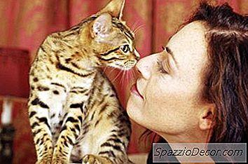 Saludo Con Toque De Nariz En Gatos