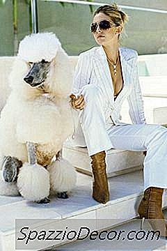 Estilos De Clipping Do Poodle Coat