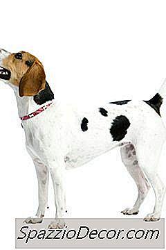 För & Nackdelar Med Barkningsapparater För Hundar