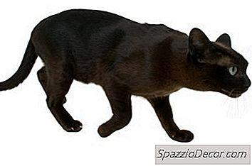 gusanos en comida de gatos