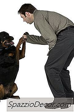 Rottweilers & Bloating