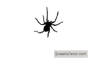 Os Sintomas De Picadas De Aranha Em Caninos