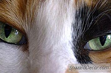 fotos de tiña en gatos