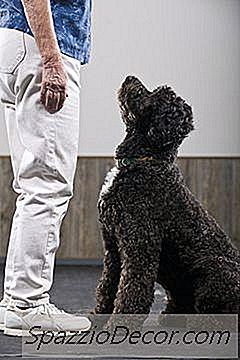 I 10 Migliori Cani Da Pastore D'Acqua