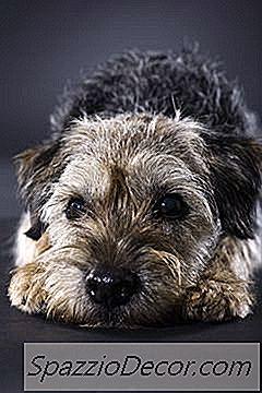 Tipos De Alambres De Juguete Terriers