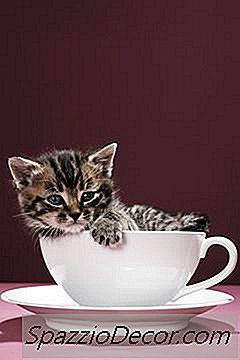 Hábitos Típicos Dos Gatinhos Recém-Nascidos