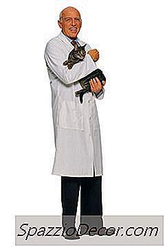 Användning Av Probiotika Hos Katter Med Njursvikt
