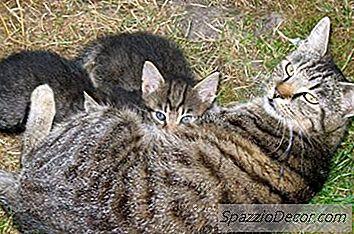 Gusanos Visibles En Gatos