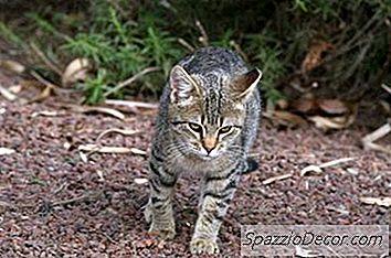 arena para gatos olor y embarazo