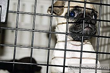 ¿Qué Puedes Hacer Cuando Tu Perro Aprende A Abrir La Puerta De Su Jaula?