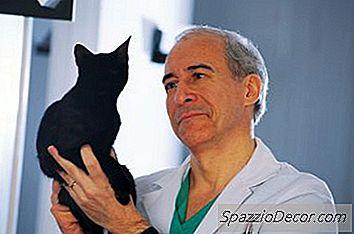 O Que Faz Com Que Os Gatos Respirem Pesadamente E Tenham Uma Perda De Apetite?