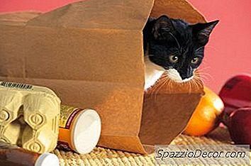 Quali Cambiamenti Si Verificano Dopo Che Un Gatto Maschio Viene Neutralizzato?