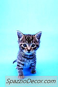 Hoe Zien Kitten-Haarballen Eruit?