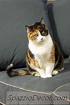 Wat Toont De Bloedpaneltest Bij Katten?
