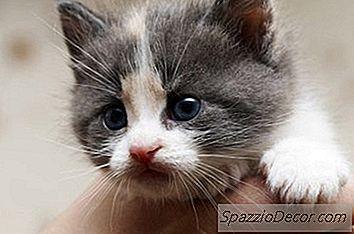 Wat Heeft Een Kitten Van Vijf Weken Nodig?