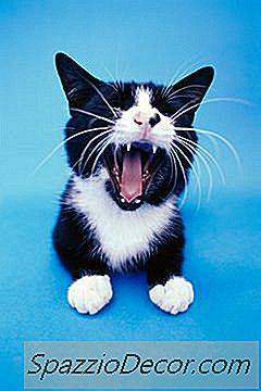 O Que Significa Quando Um Gato O Morde?