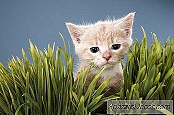 Che Cosa Significa Quando Un Gatto Mangia Erba?