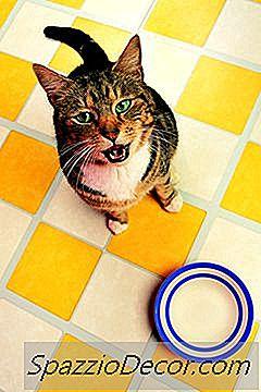 Wat Betekent Het Als Katten De Vloer Krassen Naast Hun Voerbak?