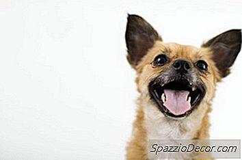 Wat Betekent Het Als Een Hond Constant Broedt?