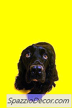 ¿Qué Significa Cuando Los Perros Esconden Sus Colas Debajo De Ellos?