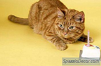 vilken födelsedag Vilken Gåva Att Ge En Katt Och Hur Man Firar Sin Födelsedag   2018 vilken födelsedag