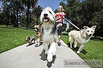 Wat Is Da2Pp Voor Honden?
