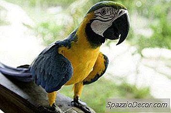 Qual É A Diferença Entre Um Papagaio E Um Periquito?