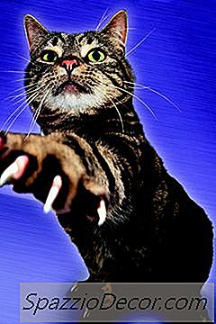 Wat Is Het Doel Van Het Slijpen Van De Nagels Van Een Kat?