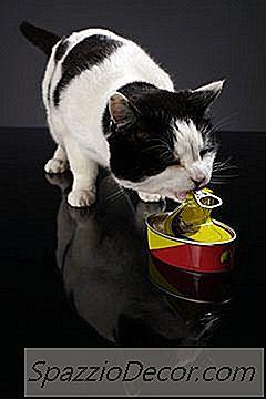 Welke Soorten Vlees Kunnen Katten Eten?