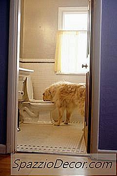 O Que Faz Com Que A Água Do Vaso Sanitário Seja Prejudicial A Cães E Gatos?