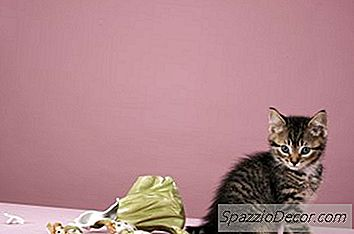 Hvornår Bliver Katte Ikke Betragtet Som Killinger?