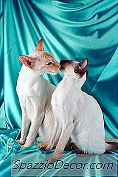 Katter Snus Og Nyser Opp Mot Andres Ansikter For Å Få Informasjon Og Å Vise Kjærlighet.