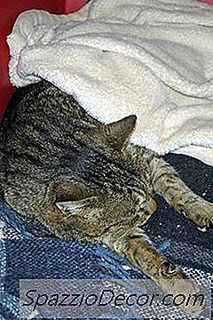 Por Que Os Gatos Dormem Muito?