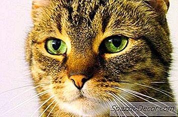 Waarom Urineren Katten In Je Kleren En Bed?